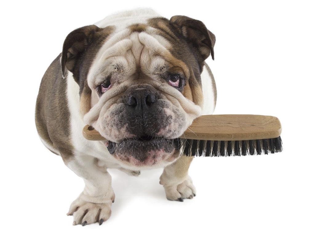 peinados-para-perros